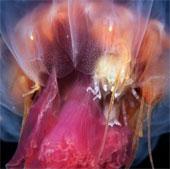 Vẻ đẹp huyền ảo của những sinh vật không xương sống