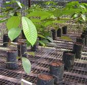Carbohydrate giúp cây chống chọi hạn hán