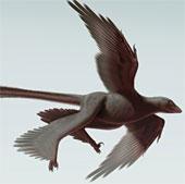 Phát hiện hóa thạch khủng long bốn cánh