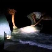 Video: Ngư dân giúp cá mập sinh con