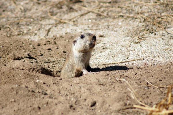 Phát hiện bốn loài chuột mới