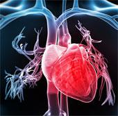 Tạo nhịp tim sinh học bằng liệu pháp gene