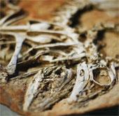 Hóa thạch làm thay đổi nhận thức về khủng long lông vũ