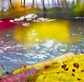 """Kỹ thuật nhiếp ảnh dưới nước khiến bạn """"lác mắt"""""""