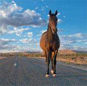 Chùm ảnh tuyệt đẹp về động vật ở nơi hẻo lánh nhất Australia