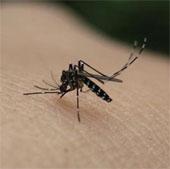 5 lý do bạn bị muỗi đốt nhiều hơn người khác