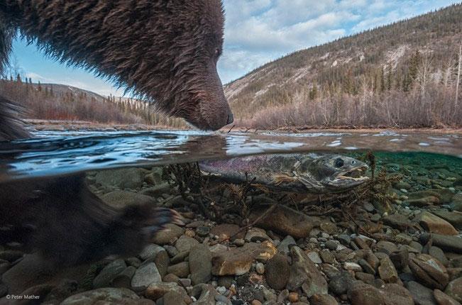 """Bức ảnh """"Cá chiêm tinh"""" thi ảnh động vật đẹp nhất năm"""