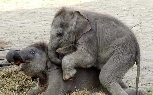 Những loài vật tượng trưng may mắn trong văn hóa thế giới