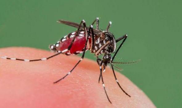 Cảnh báo về sự xuất hiện ký sinh trùng sốt rét kháng thuốc