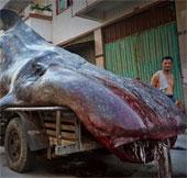Phát hiện quái vật biển kỳ dị ở Trung Quốc