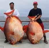 Bắt được 3 con cá mặt trăng hiếm trong cùng 1 ngày