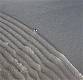 Lướt ván ở vùng thuỷ triều lớn của Alaska