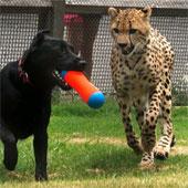 """Những """"cặp đôi"""" khác thường, kỳ quặc trong thế giới động vật"""
