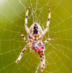Sự thật về cách di chuyển của loài nhện trên mạng nhện