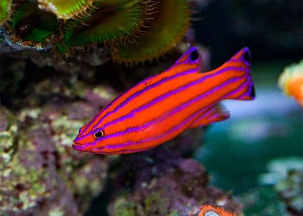 10 loài cá đắt giá nhất trên thế giới