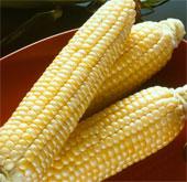 Công nhận 4 giống ngô biến đổi gene làm thực phẩm