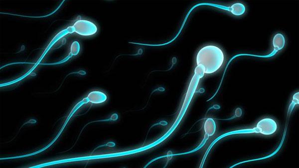 Chữa vô sinh nam bằng tinh trùng nhân tạo