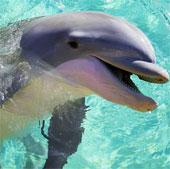 Vì sao cá voi và cá heo lại rít lên?