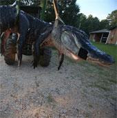 Bắt được cá sấu khổng lồ 450kg tại Mỹ