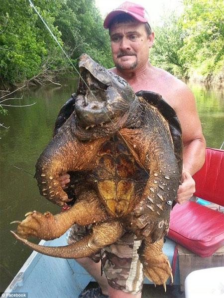 """Bắt được """"thủy quái"""" rùa cá sấu khủng cực quý hiếm"""