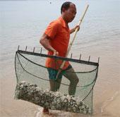 Cầu gai cát xuất hiện dày đặc ở bãi biển Nha Trang