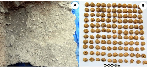 Người cổ đại ăn ốc từ 30.000 năm trước