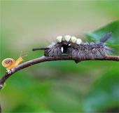 Khoảnh khắc lãng mạn của côn trùng