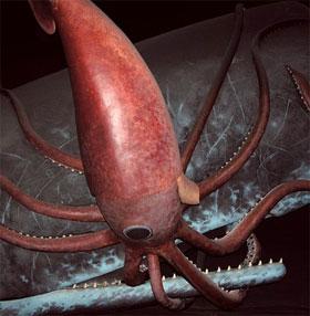 Mối thù truyền kiếp của đại dương: Mực khổng lồ và cá nhà táng