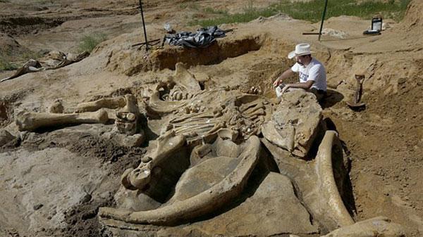 Hộ gia đình đã choáng váng khi phát hiện ra bộ xương hoá thạch voi ma-mút 60.000 tuổi trong khu vực đất kinh doanh hộ gia đình