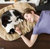 Giải mã: Những điều chưa ai biết về loài mèo