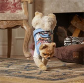 Video: Chú chó lập kỷ lục đi hai chân nhanh nhất thế giới