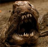 Cận cảnh loài cá ăn thịt man rợ nhất Đại Tây Dương