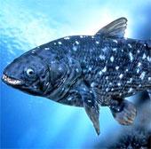 Các loài cá tiền sử khổng lồ vẫn sống đến nay
