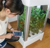 Thiết bị giúp trồng rau quả trong phòng