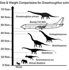 Phát hiện loài khủng long dài 26m, nặng 65 tấn
