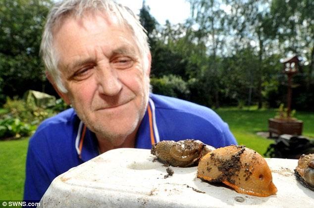 Sên khổng lồ ăn thịt xâm nhập nước Anh