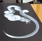Video: Vẽ tranh rồng uốn lượn chỉ bằng một nét