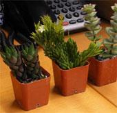 Cây xanh giúp tăng hiệu quả làm việc của dân văn phòng