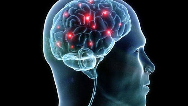 Nucleus Accumbens là khu vực tạo ra những xung thần kinh khiến ta có cảm giác dễ chịu khi được thỏa mãn.