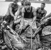 """Sự vật về Cassius - Cá sấu """"khủng"""" nhất thế giới"""