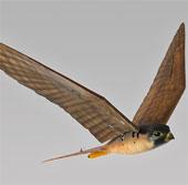 Phát triển robot bay để xua đuổi chim thật tàn phá mùa màng
