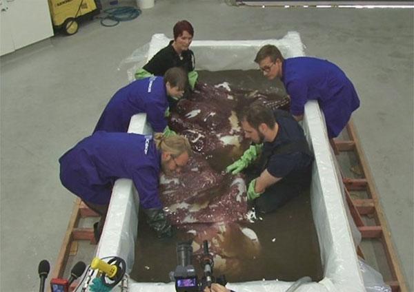 Ngư dân bắt được mực siêu khủng ở New Zealand
