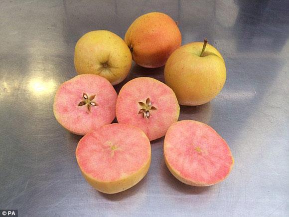 Giống táo vỏ vàng ruột hồng đầu tiên trên thế giới