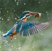 Những bức ảnh thiên nhiên đoạt giải Big Picture