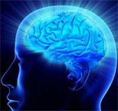 Gene quyết định khả năng ghi nhớ của con người