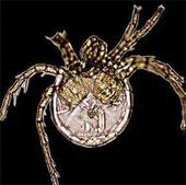 Một số loài côn trùng được đặt tên theo người nổi tiếng