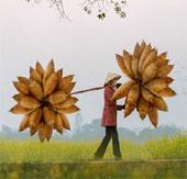 Những khoảnh khắc bình của dị làng quê Việt Nam