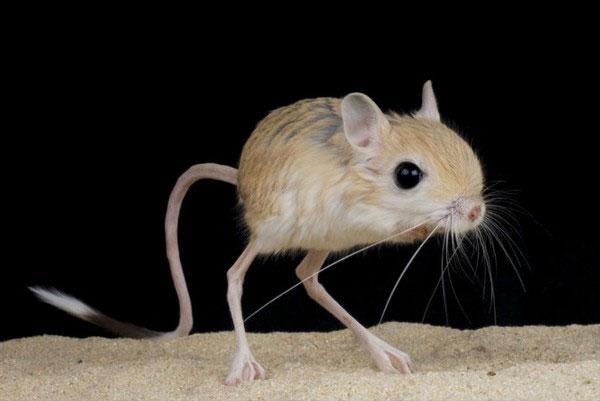 Những động vật lai tạo xấu xí nhất trên Trái Đất
