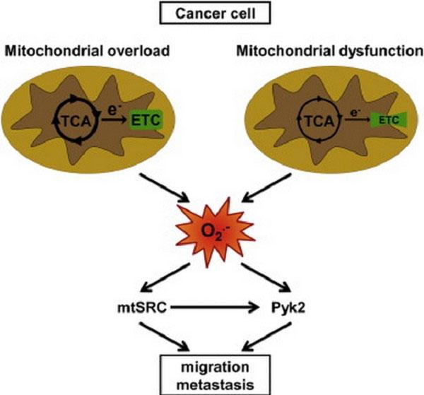 Ý tưởng mới có thể loại bỏ khả năng di căn của tế bào ung thư