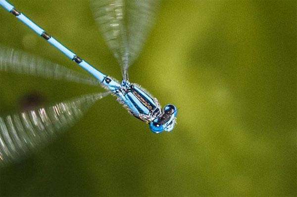Giới hạn sợ hãi của côn trùng và biến đổi khí hậu